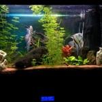 Acquario controllato da Fishino (Arduino based)